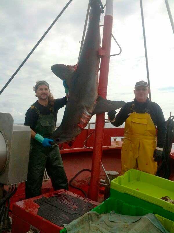 Tiburones del Cantábrico