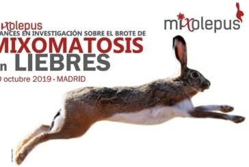 Avances en la investigación sobre el brote de la mixomatosis en liebres