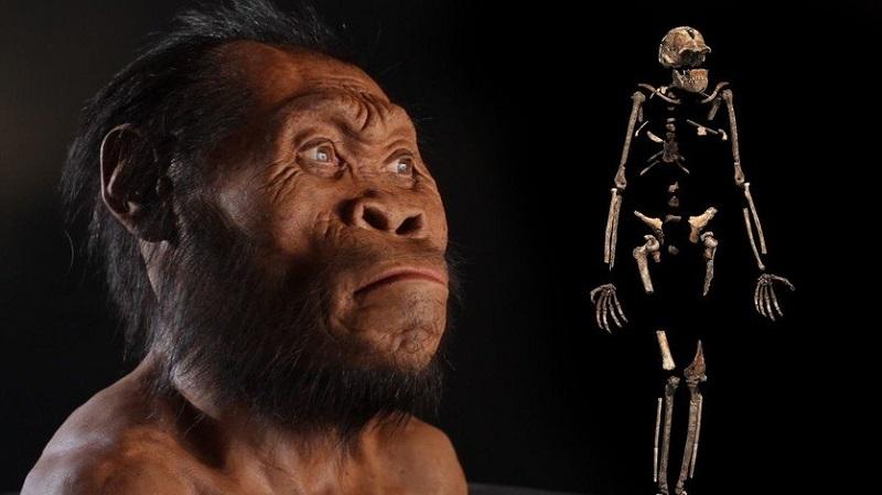 La caza y el consumo de carne nos permitió sobrevivir como humanos