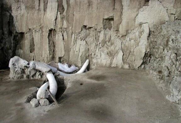 Hallados en México los restos de 14 mamuts en trampas de cazadores