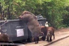 Animalistas consiguen 200.000 firmas contra la caza