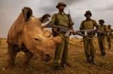 La India autoriza matar furtivos para proteger a los rinocerontes