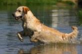Tudela será el escenario de la Copa de Europa de Perros de Cobro
