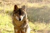 Osos, Lobos y Gaviotas