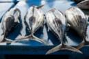 Mercurio en el pescado: Dimensionemos el riesgo