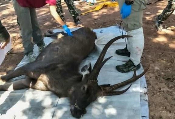Hallado muerto un ciervo con siete kilos de basura en su estómago