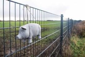 Dinamarca termina de construir la valla que impedirá la entrada de jabalíes