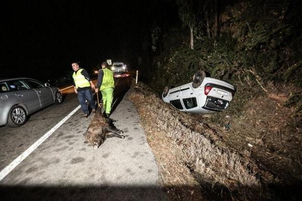 Los accidentes de tráfico contra jabalíes en España se disparan un 47%