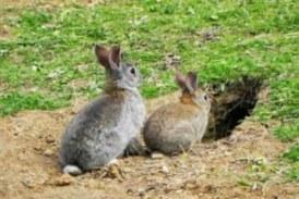Vecinos denuncian una plaga de conejos en Portugalete (Bizkaia)