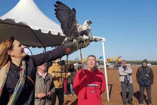 La excelente calidad de las aves volvió a protagonizar el Campeonato de España de Cetrería