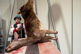 Madrid Fusión 2020: despiece de un ciervo en vivo y en directo
