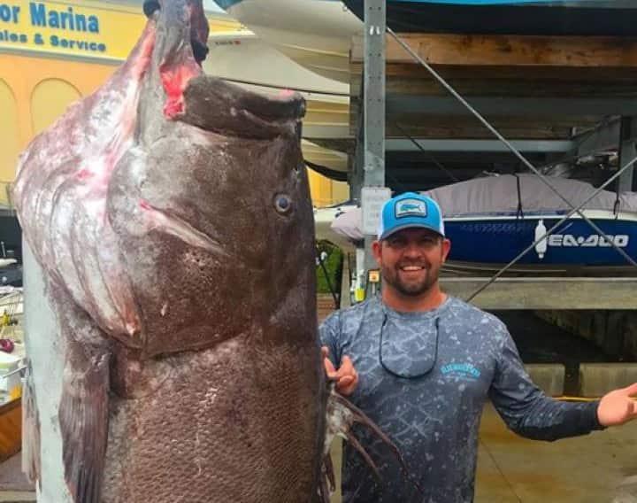 El mero más viejo jamás pescado en EE UU tenía 50 años y era enorme