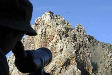 Castilla y León: Ornitólogos piden un día del fin de semana y la mitad de festivos sin caza