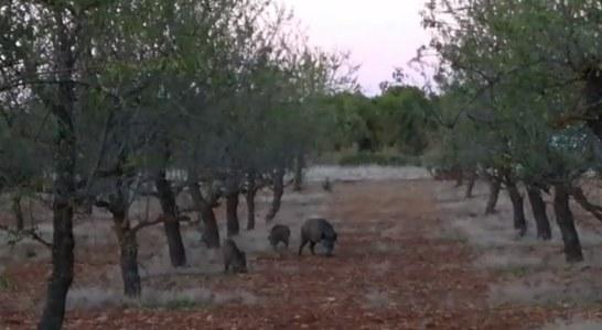 La Rioja. Piden ayuda para combatir el exceso de fauna: «Queremos cazar y no nos dejan»
