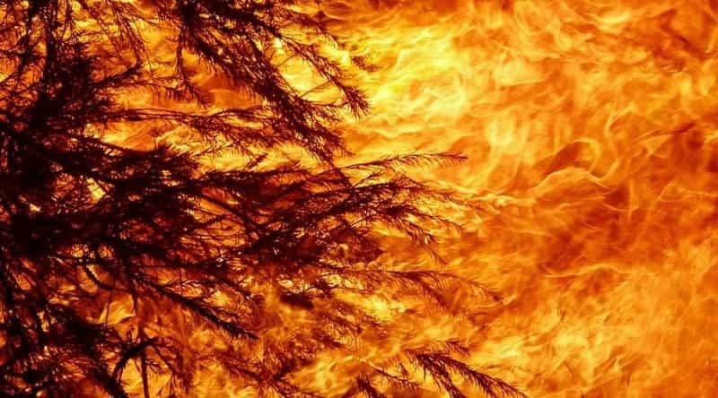 Infierno de fuego en Australia. Los ecologistas también tienen culpa
