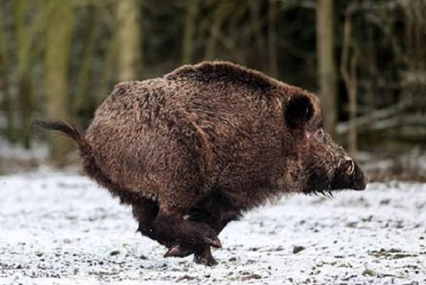 Reflexiones invernales sobre la caza