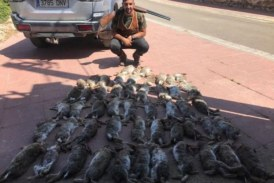 Mientras los ecologistas califican el conejo como especie amenazada