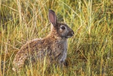 Grito agónico ante la sobrepoblación de la fauna cinegética en Navarra: «Muchas veces dan ganas de llorar»