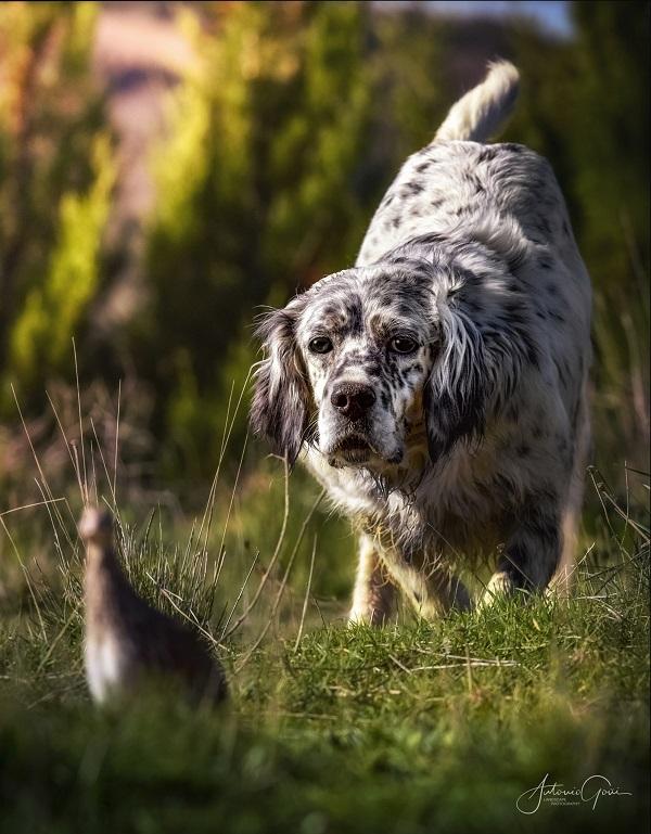 Comienza en marzo la tercera edición del curso de adiestrador de perros de caza