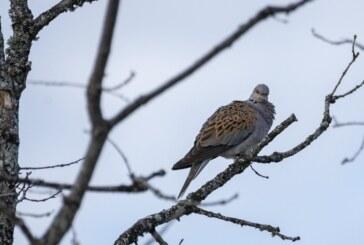 ¿Dónde está el GPS de las palomas y tórtolas?