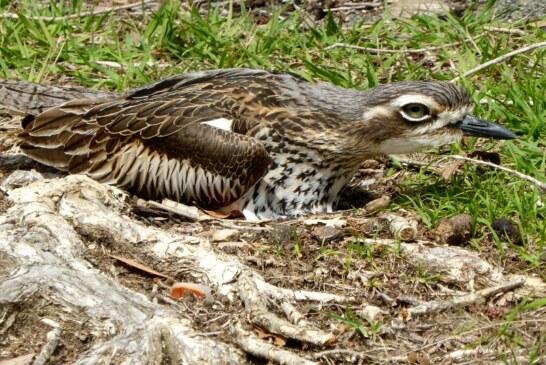 ¿Cómo afecta la gestión cinegética a otras aves no cinegéticas?