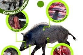 Cuatro personas enferman de triquinosis tras comer embutido casero de jabalí