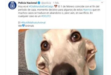 La RFEC exige a la Policía Nacional la rectificación de sus comentarios en RRSS acusando a los cazadores de abandonar y maltratar a sus perros
