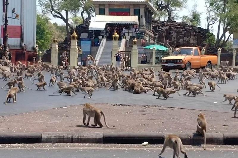 Coronavirus: cientos de monos hambrientos amenazan las calles de Tailandia