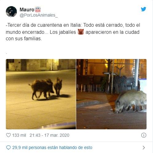 Animales silvestres son los nuevos turistas de las ciudades en cuarentena