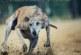 El Parlamento Europeo rechaza una petición animalista sobre el supuesto maltrato animal de galgos