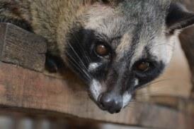 Coronavirus y fauna silvestre