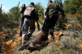 Los cazadores somos una especie en extinción, no hay relevo generacional