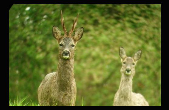 Adecana solicita al servicio forestal y cinegético el replanteamiento de las medidas de gestión afectadas por el covid 19