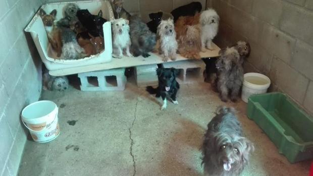 La Fiscalía investigará la adopción de animales con el único fin de sacarlos a pasear en el estado de alerta