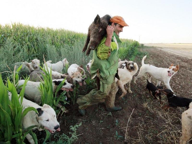 El control por daños de especies cinegéticas es imprescindible durante el estado de alarma