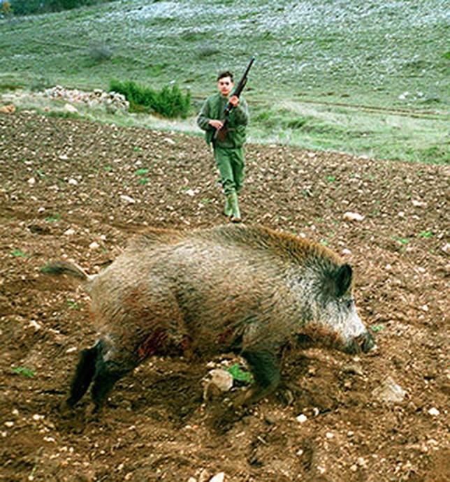 Daños: cazar para sembrar y sembrar para cazar