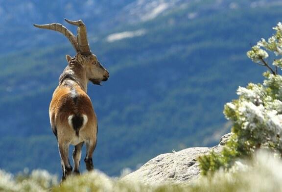 ¿Qué efectos tiene la prohibición de la caza en los parques nacionales?