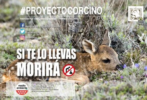 """La asociación del corzo español pone en marcha la xii campaña """"proyecto corcino"""""""