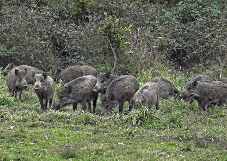 Los cazadores navarros, preocupados: el medio natural y la vida silvestre, seriamente dañado y perjudicado