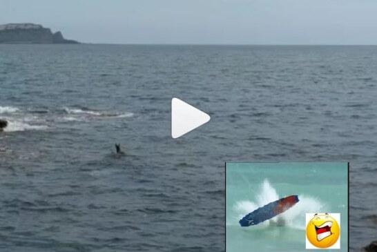 Pese a las restricciones un corzo intento surfear la ola de Mundaka (Ver vídeo)