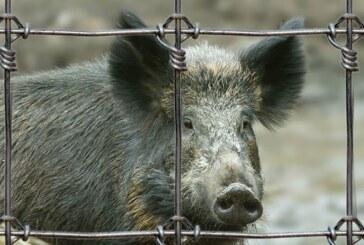 Desmintiendo las mentiras animalistas sobre las granjas cinegéticas, las poblaciones de especies silvestres y la caza