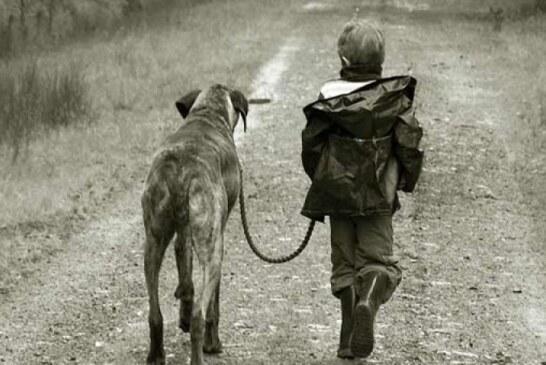 Los cazadores piden poder sacar a los perros de caza a los cotos para mejorar el bienestar de los animales