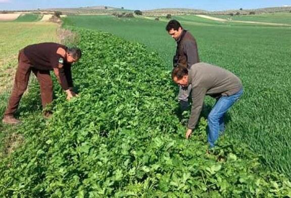 RFEC y Artemisan presentan al Gobierno medidas agroambientales para una nueva PAC que apueste por la recuperación de la fauna menor y la biodiversidad