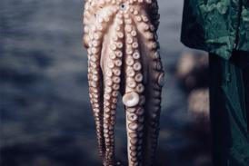 Cantabria recupera tras décadas la pesca recreativa del pulpo para este verano aunque con restricciones