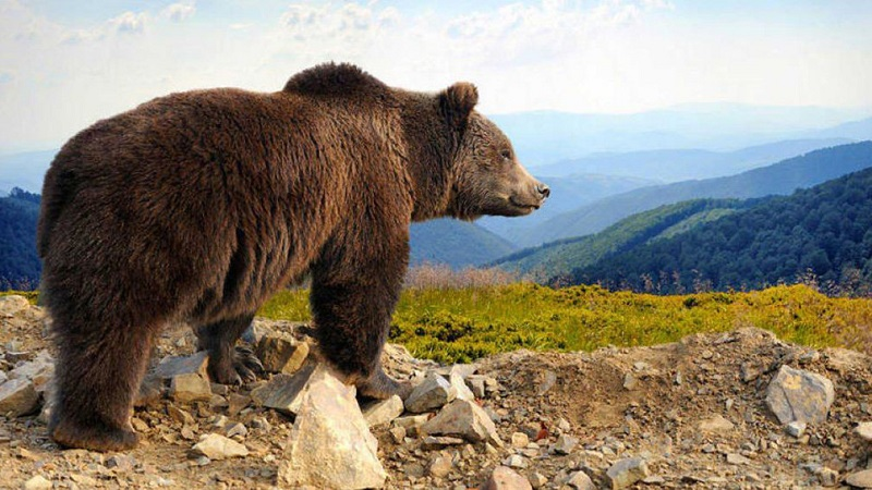Suspenden la caza y el acceso a una zona de montaña para proteger a una osa con crías