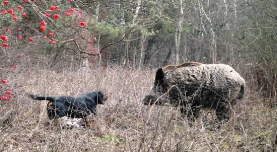 La caza ya no es una afición, es una obligación y nosotros debemos de correr con todos los gastos