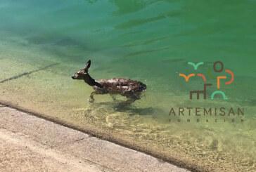 Canales de la muerte: Fundación Artemisan