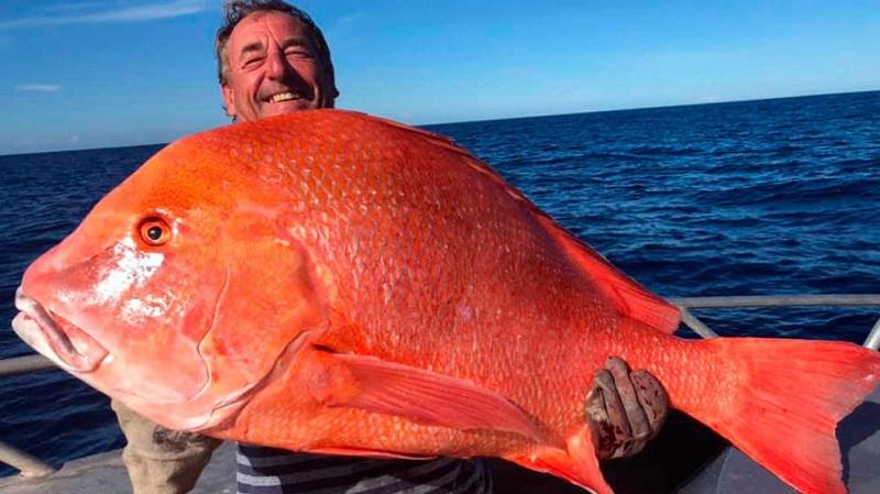Pesca un emperador rojo de 22 kilos y lo dona a la ciencia para que lo estudien