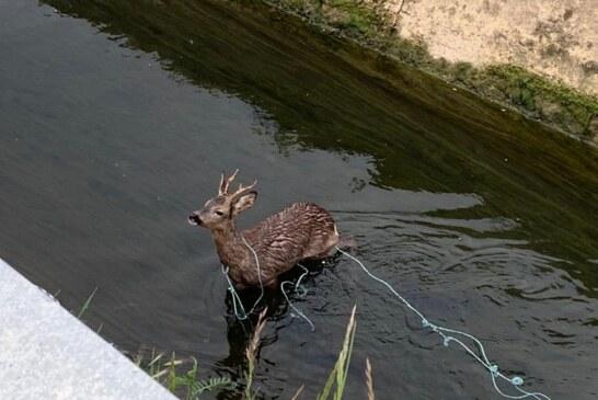 Artemisan y ACE unen fuerzas para evitar la muerte de animales en canales de agua