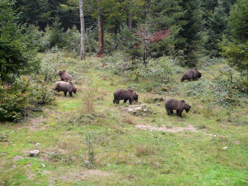 Impacto del turismo de naturaleza sobre la fauna silvestre